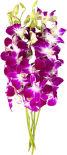Орхидеи букет 5шт в ассортименте